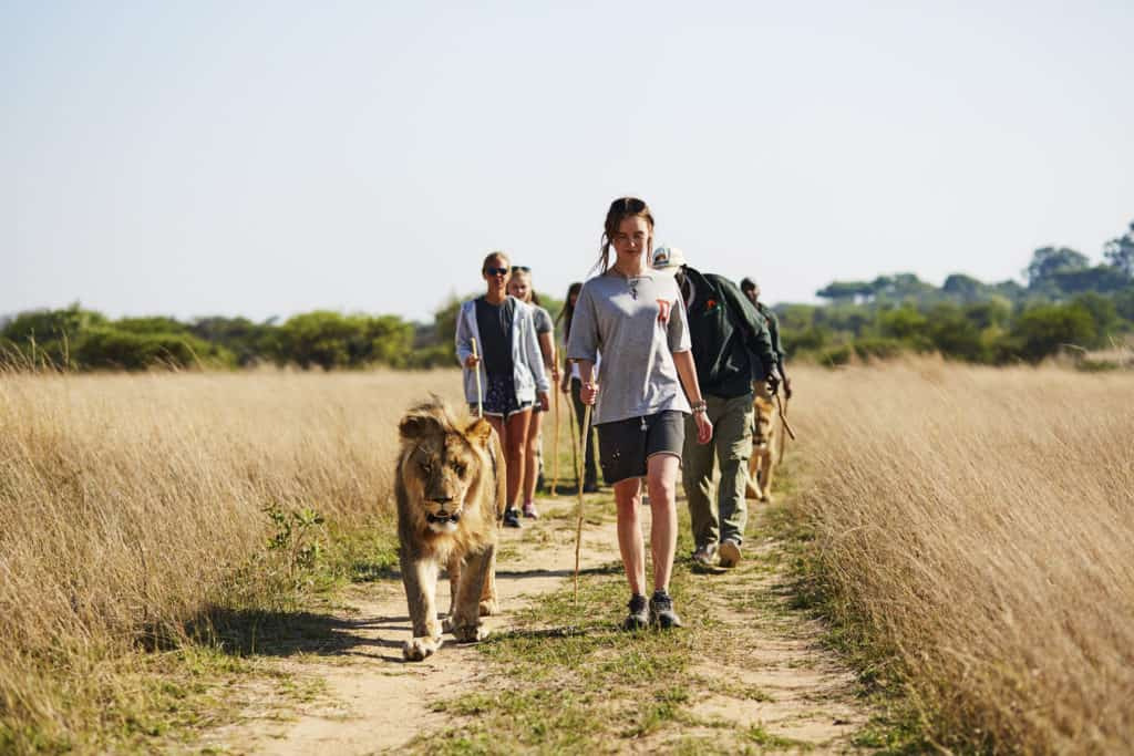 Wildlife Encounter Volunteering short